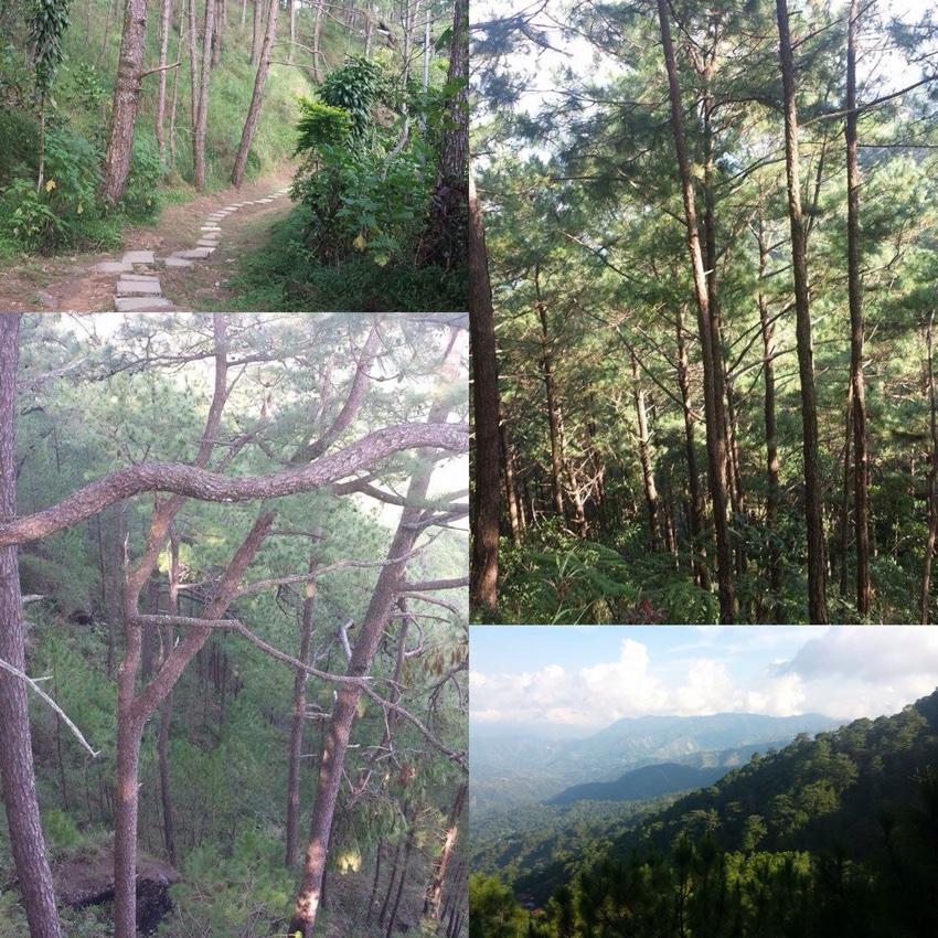 Baguio Tree Top - Camp John Hay